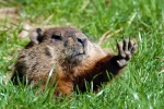 groundhogs2